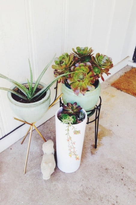porch-succulents-1